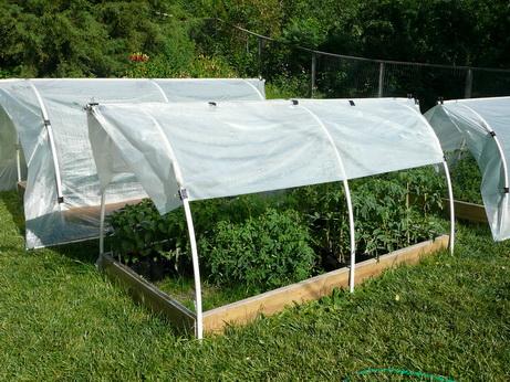 как защитить растения от жары