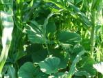 как защищать растения от жары