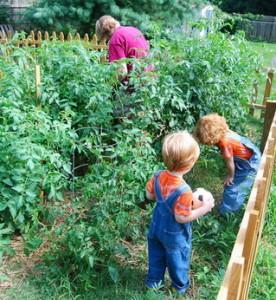 как поливать помидоры после посадки в грунт