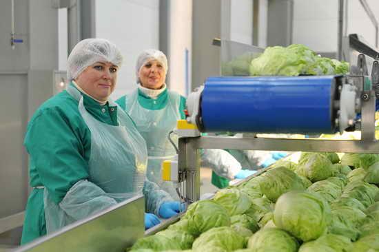 Собственное производство салатов1