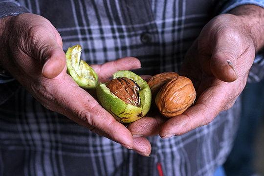 плюсы и минусы орехового бизнеса