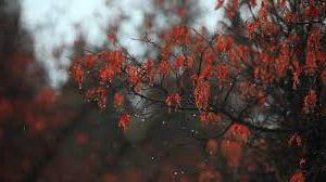 дождик осенью тоска