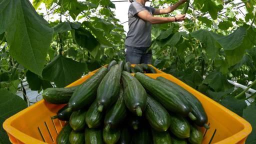 Бизнес план выращивания овощей
