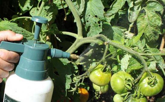 Чем подкормить помидоры под корень