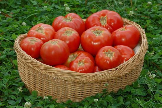 Чем поливать помидоры