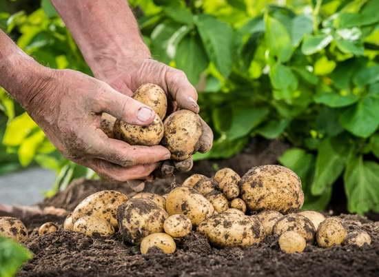 Как удобрять растения органическими удобрениями правильно