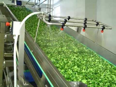 Собственное производство салатов как бизнес